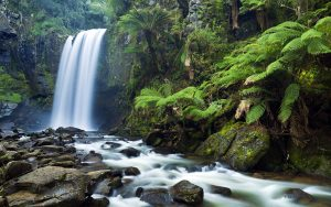 forest_jungle_trees_waterfall